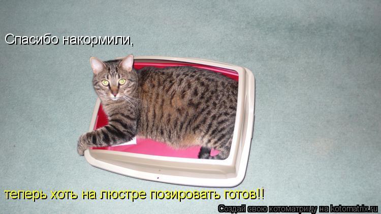 Котоматрица: Спасибо накормили, теперь хоть на люстре позировать готов!!