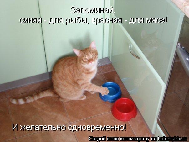 Котоматрица: Запоминай: синяя - для рыбы, красная - для мяса! И желательно одновременно!