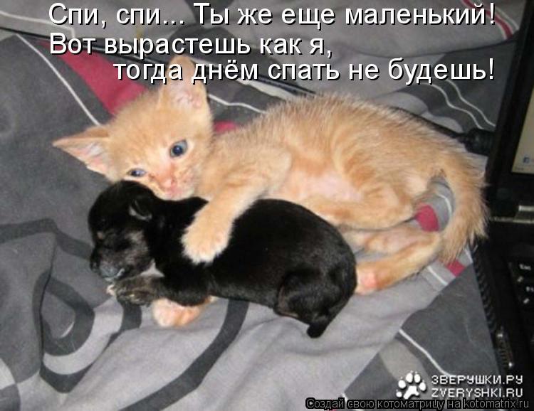 Спи, спи... Ты же еще маленький! Вот вырастешь как я, тогда днём спа