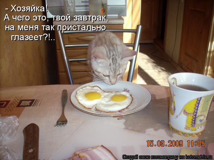 Котоматрица: - Хозяйка! А чего это, твой завтрак, на меня так пристально  глазеет?!..