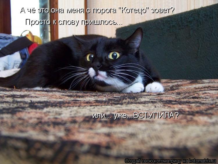 """Котоматрица: А чё это она меня с порога """"Котецо"""" зовет? Просто к слову пришлось... или... уже...ВСТУПИЛА?"""