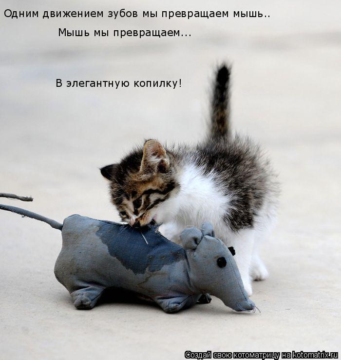Котоматрица: Одним движением зубов мы превращаем мышь.. Мышь мы превращаем... В элегантную копилку!
