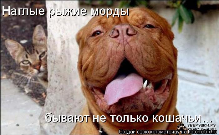 Котоматрица: Наглые рыжие морды бывают не только кошачьи...