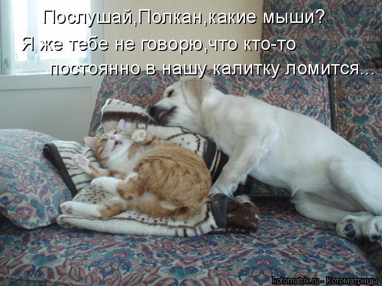 Котоматрица: Послушай,Полкан,какие мыши? Я же тебе не говорю,что кто-то  постоянно в нашу калитку ломится...