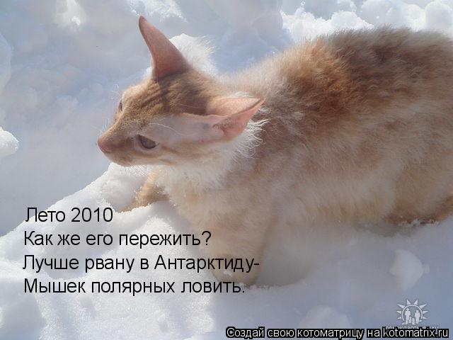 Котоматрица: Лето 2010 Как же его пережить? Лучше рвану в Антарктиду- Мышек полярных ловить.