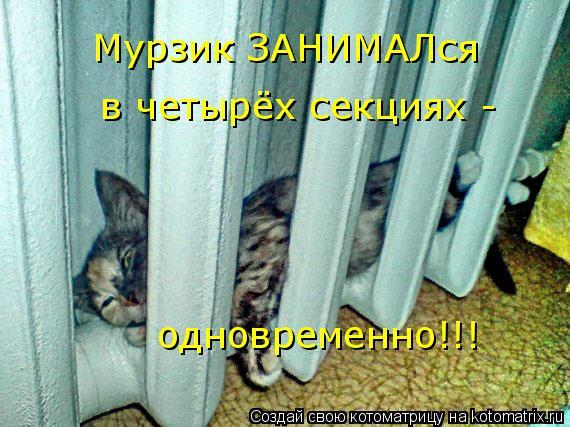 Котоматрица: Мурзик ЗАНИМАЛся в четырёх секциях - одновременно!!!