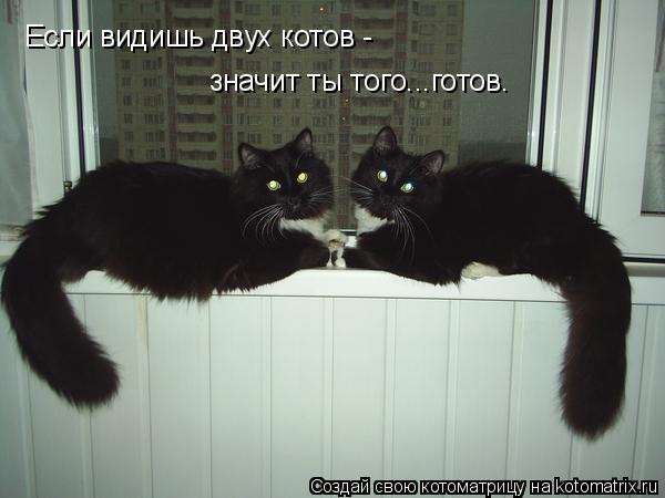 Котоматрица: Если видишь двух котов -  значит ты того...готов.
