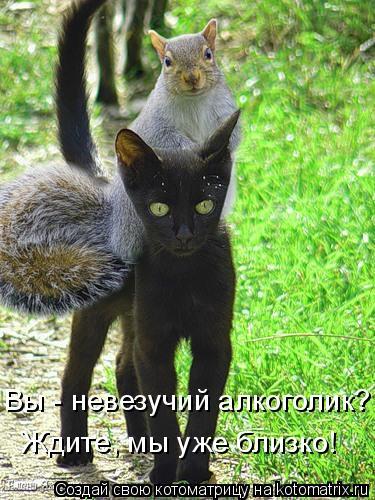Котоматрица - Ждите, мы уже близко! Вы - невезучий алкоголик?