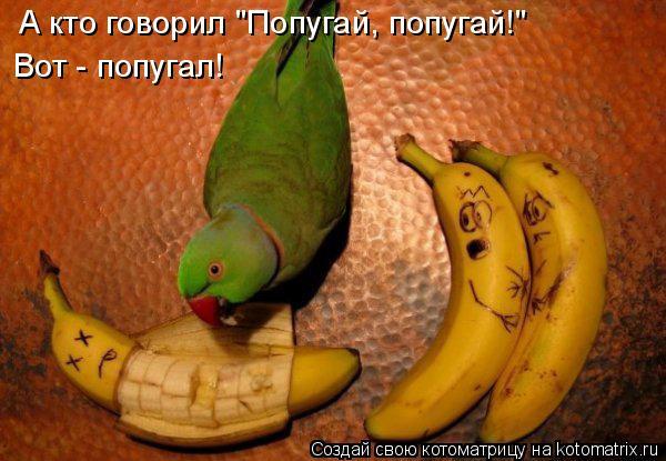 """Котоматрица - А кто говорил """"Попугай, попугай!"""" Вот - попугал!"""