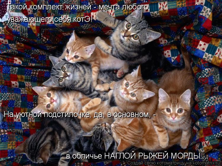 Котоматрица: Такой комплект жизней - мечта любого,  уважающего себя котЭ! На уютной подстилочке, да, в основном, -  в обличье НАГЛОЙ РЫЖЕЙ МОРДЫ....