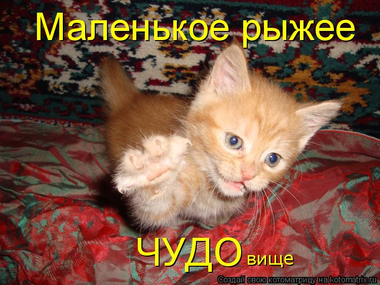 http://kotomatrix.ru/images/lolz/2010/07/29/641070.jpg