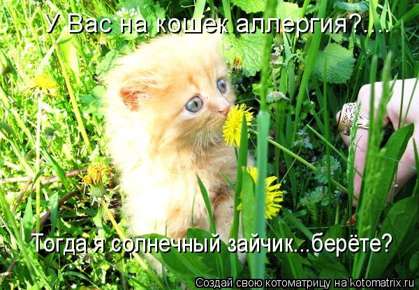 Котоматрица: У Вас на кошек аллергия?.... Тогда я солнечный зайчик...берёте?