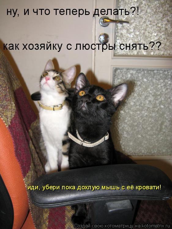 Котоматрица: ну, и что теперь делать?! как хозяйку с люстры снять?? иди, убери пока дохлую мышь с её кровати!