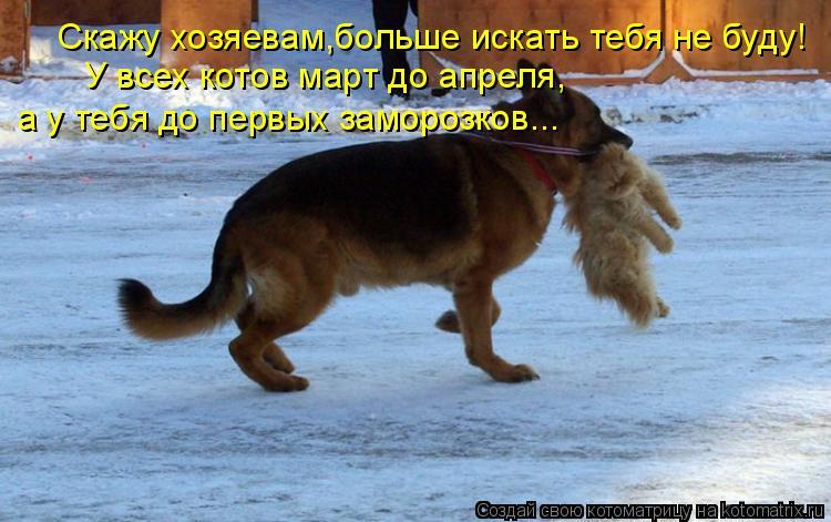 Котоматрица: Скажу хозяевам,больше искать тебя не буду! У всех котов март до апреля, а у тебя до первых заморозков...