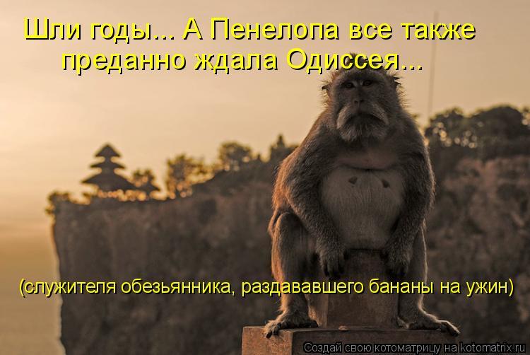 Котоматрица: Шли годы... А Пенелопа все также  преданно ждала Одиссея...  (служителя обезьянника, раздававшего бананы на ужин)