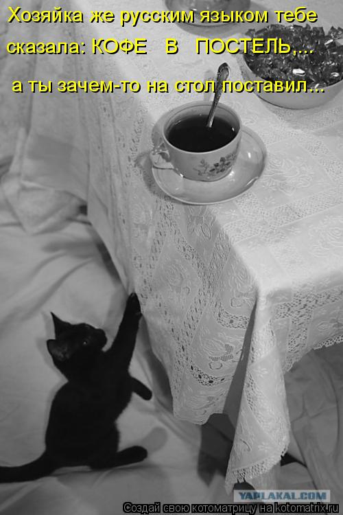 Котоматрица: Хозяйка же русским языком тебе  а ты зачем-то на стол поставил...  сказала: КОФЕ   В   ПОСТЕЛЬ,...