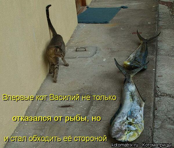 Котоматрица: и стал обходить её стороной Впервые кот Василий не только отказался от рыбы, но