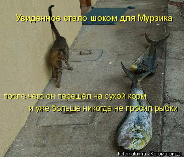 Котоматрица: Увиденное стало шоком для Мурзика после чего он перешёл на сухой корм и уже больше никогда не просил рыбки