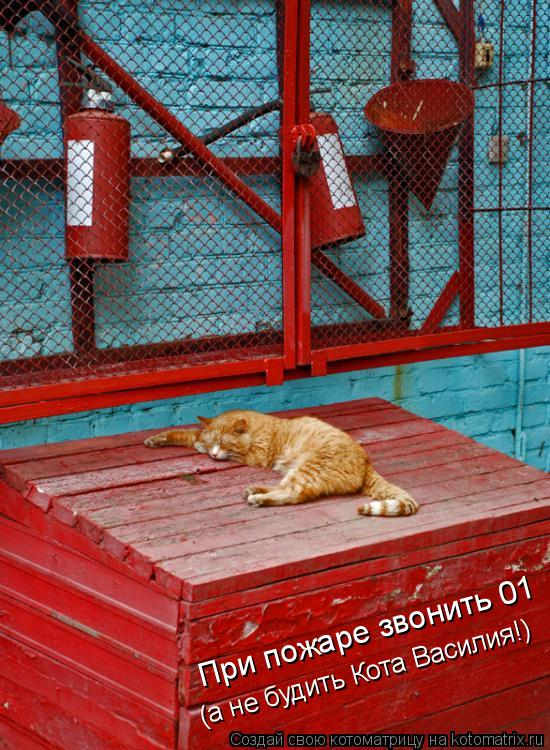 Котоматрица: При пожаре звонить 01 (а не будить Кота Василия!)
