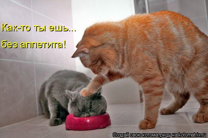 Котоматрица: Как-то ты ешь... без аппетита!