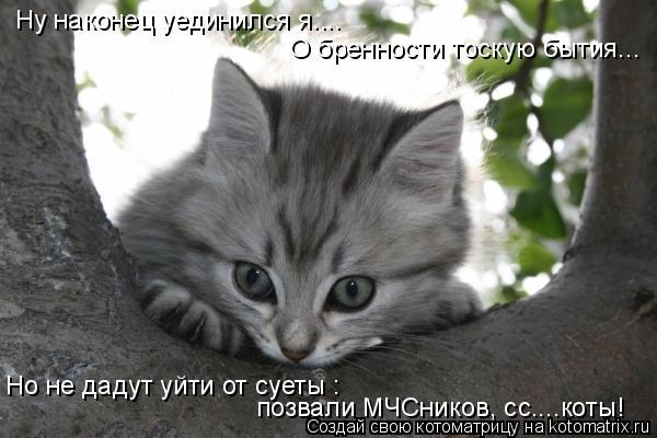 Котоматрица: Ну наконец уединился я.... О бренности тоскую бытия... Но не дадут уйти от суеты : позвали МЧСников, сс....коты!