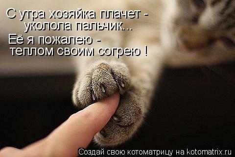 Котоматрица: С утра хозяйка плачет - уколола пальчик... Её я пожалею - теплом своим согрею !