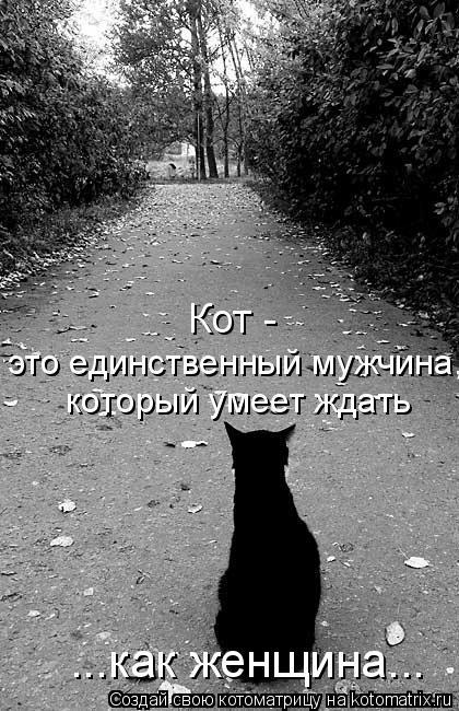 Котоматрица: который умеет ждать это единственный мужчина,  Кот -  ...как женщина...