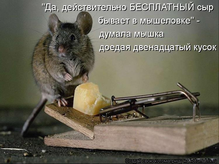 """Котоматрица: """"Да, действительно БЕСПЛАТНЫЙ сыр бывает в мышеловке"""" - думала мышка доедая двенадцатый кусок"""
