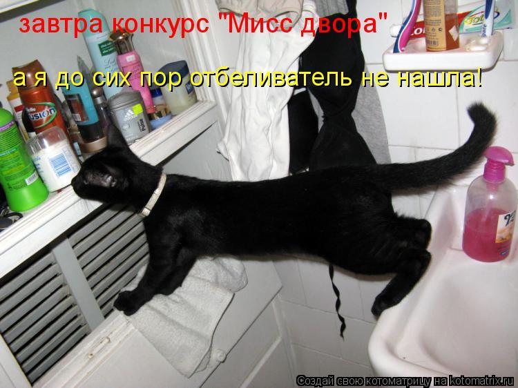 """Котоматрица: а я до сих пор отбеливатель не нашла! завтра конкурс """"Мисс двора"""""""