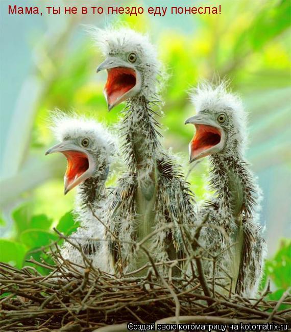 Мама, ты не в то гнездо еду понесла!