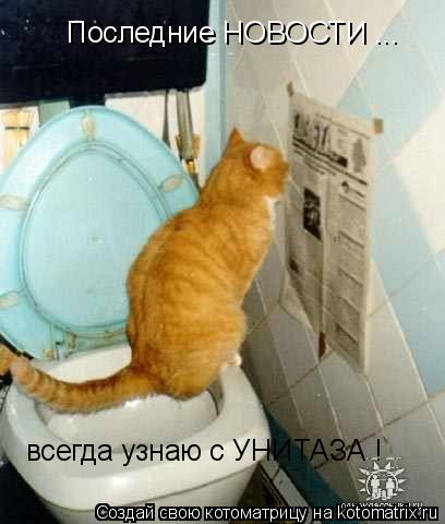 Котоматрица: Последние НОВОСТИ ... всегда узнаю с УНИТАЗА !