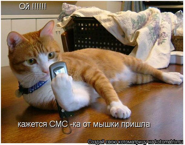 Котоматрица: Ой !!!!!! кажется СМС -ка от мышки пришла