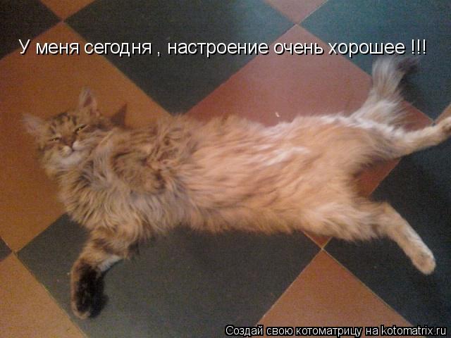 Котоматрица: У меня сегодня , настроение очень хорошее !!!