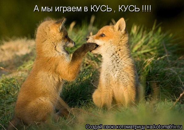 Котоматрица: А мы играем в КУСЬ , КУСЬ !!!!