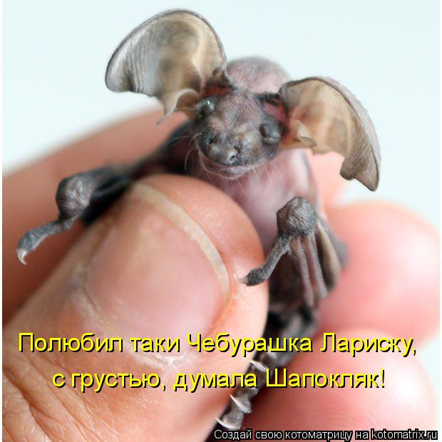 http://kotomatrix.ru/images/lolz/2010/08/02/643930.jpg