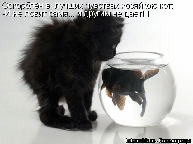 Котоматрица: Оскорблён в  лучших чувствах хозяйкою кот: -И не ловит сама... и другим не даёт!!!