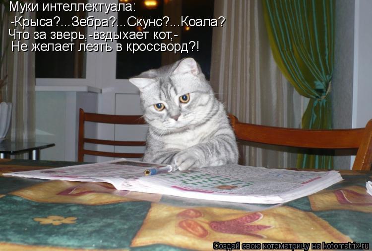 Котоматрица: -Крыса?...Зебра?...Скунс?...Коала? Муки интеллектуала: Что за зверь,-вздыхает кот,- Не желает лезть в кроссворд?!