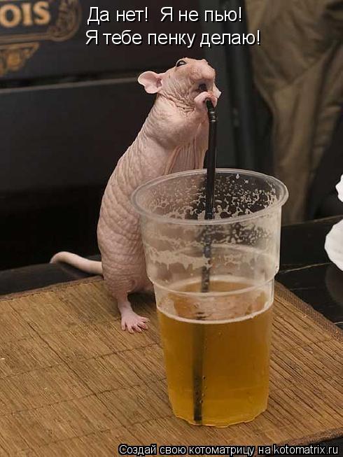 Котоматрица - Да нет!  Я не пью!  Я тебе пенку делаю!