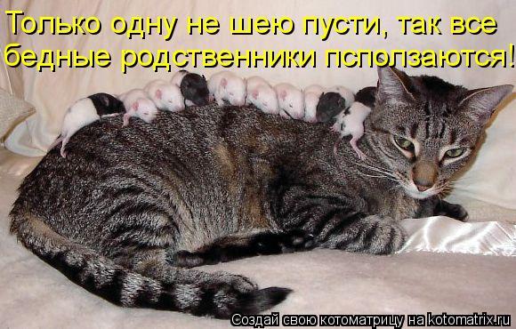 Котоматрица: Только одну не шею пусти, так все бедные родственники псползаются!