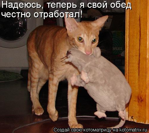 Кошечка во сне оберегала спящую крысу-лентяйку?