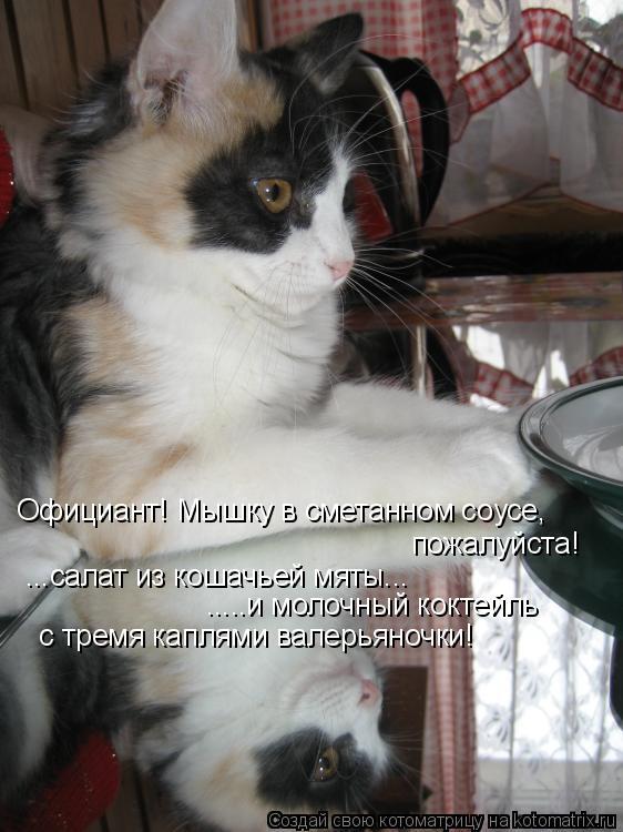 Официант! Мышку в сметанном соусе, пожалуйста! ...салат из кошачьей мя