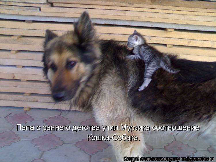 Котоматрица: Папа с раннего детства учил Мурзика соотношение  Кошка-Собака.