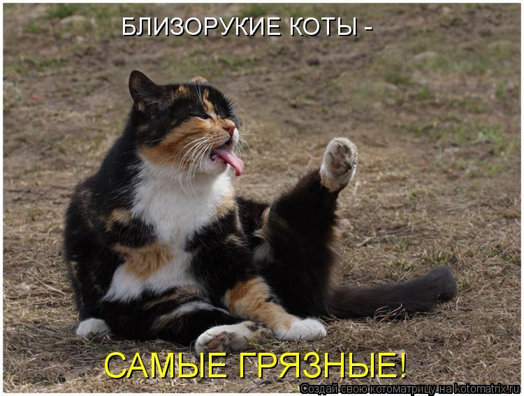 Котоматрица: БЛИЗОРУКИЕ КОТЫ - САМЫЕ ГРЯЗНЫЕ!
