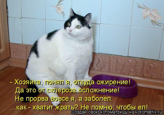 Котоматрица: - Хозяйка, понял я, откуда ожирение!  Да это от склероза осложнение!  Не прорва вовсе я, а заболел.  ...как - хватит жрать? Не помню, чтобы ел!