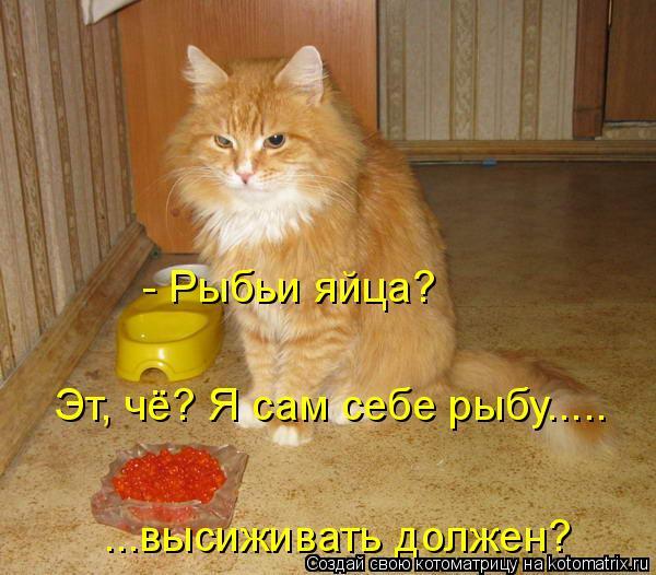 Котоматрица: Эт, чё? Я сам себе рыбу..... ...высиживать должен? - Рыбьи яйца?