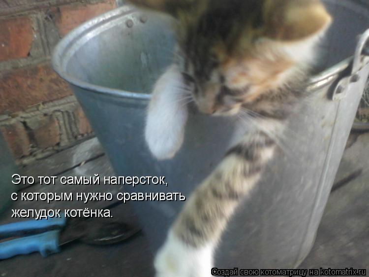 Это тот самый наперсток, с которым нужно сравнивать желудок котёнка.