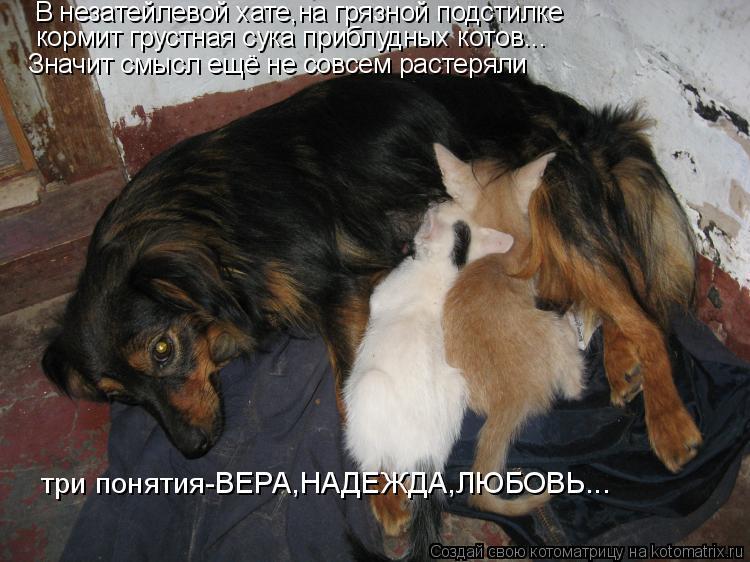 Котоматрица: В незатейлевой хате,на грязной подстилке кормит грустная сука приблудных котов... три понятия-ВЕРА,НАДЕЖДА,ЛЮБОВЬ... Значит смысл ещё не сов