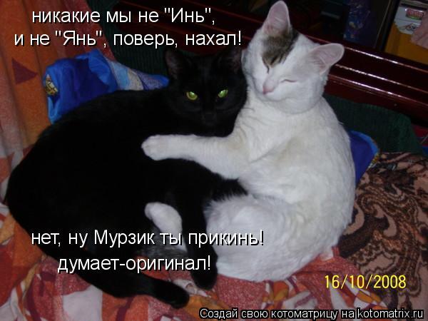 """Котоматрица: никакие мы не """"Инь"""", думает-оригинал! и не """"Янь"""", поверь, нахал! нет, ну Мурзик ты прикинь!"""