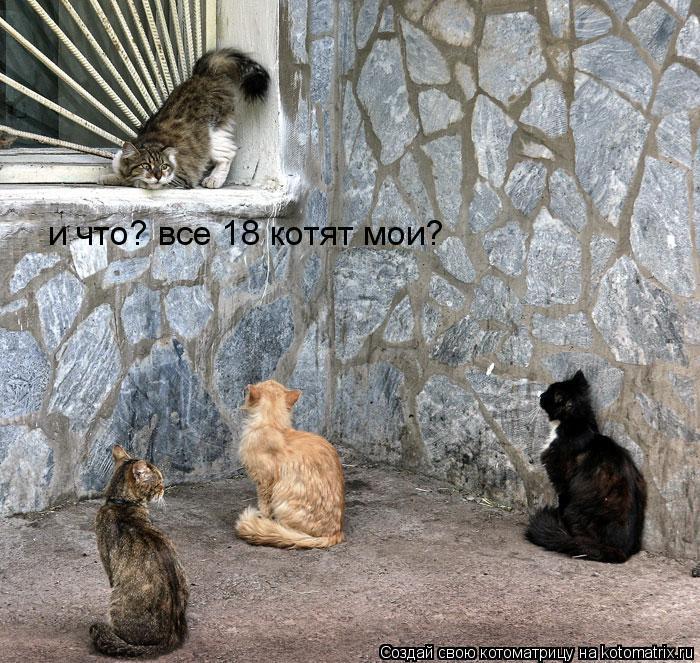 Котоматрица: и что? все 18 котят мои?