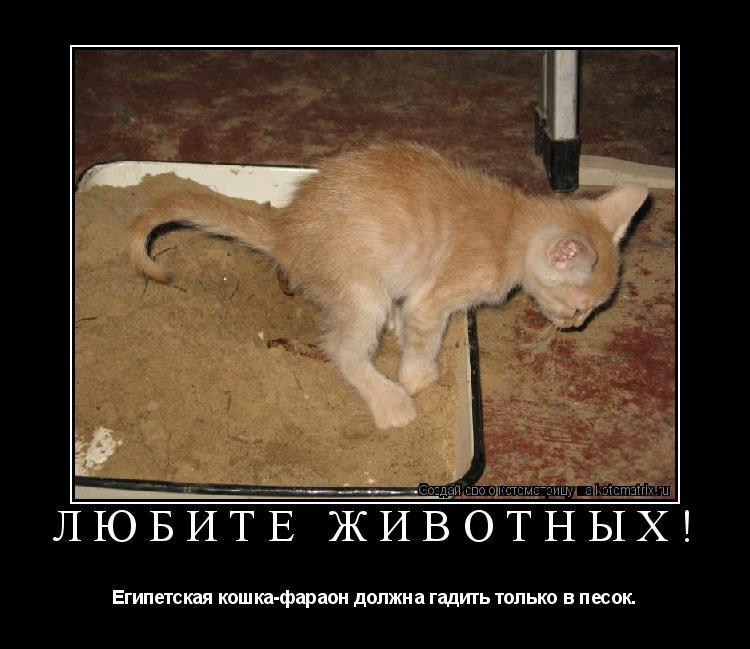 Как сделать чтобы котенок покакал 214